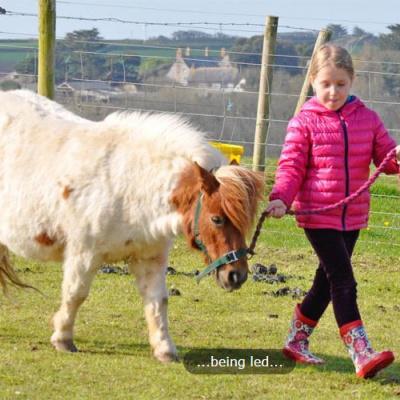 Children love our animals