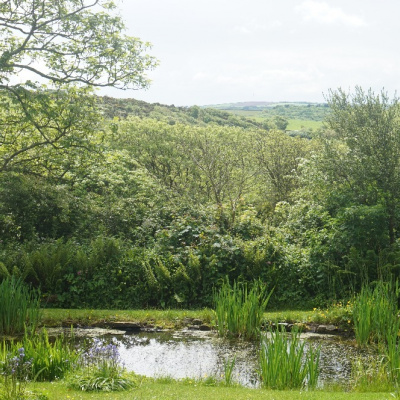 The pond at the bottom of the garden