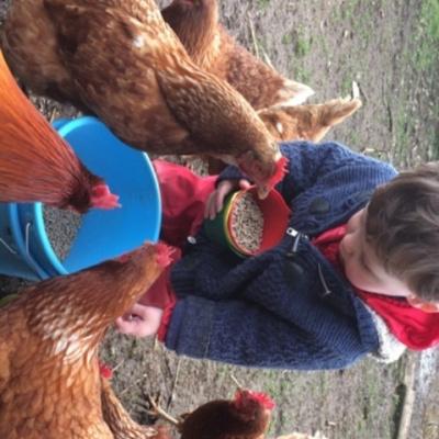 Animal Feeding onsite