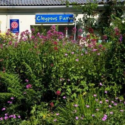 Chypons farm
