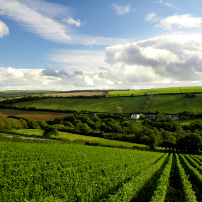 Located opposite the Camel Valley Vineyards on the Camel Trail