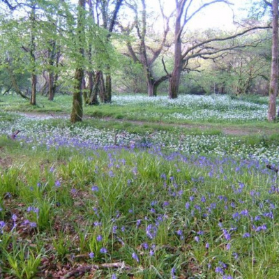 20 acre woodland area is a wildlife paradise