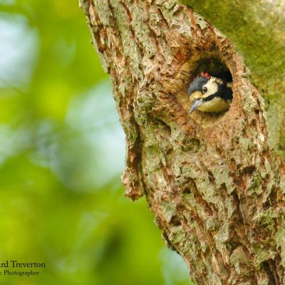 Bird watchers heaven