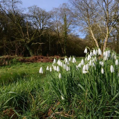 Natural beauty on your doorstep at Butterwell Farm