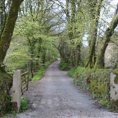 Lane to main yard at Fenteroon