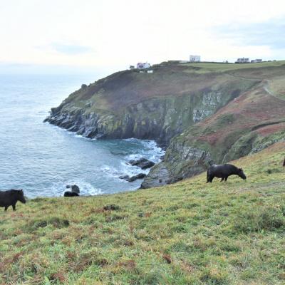 BP in distance, cliff ponies