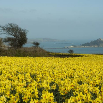 St Michael's Mount in distance